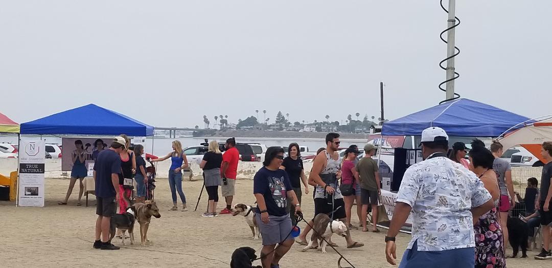 Dog Dayz On The Island Socal K9 Foundation