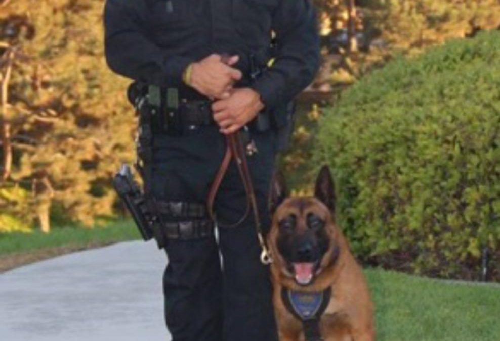 "K9 ""Zeus"" Chula Vista Police Department K9 Unit"